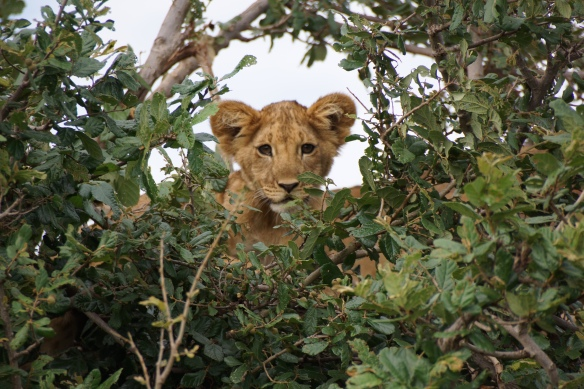 Travel highlights - hoping to get back to Africa
